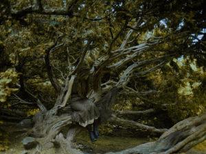 Forestlover | Sesja fotograficzna